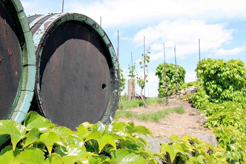 ブドウ畑とワイン樽