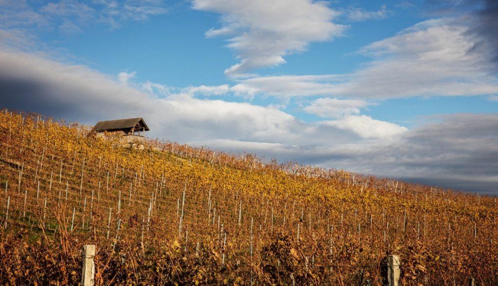 ワイン土地画像5-秋の畑